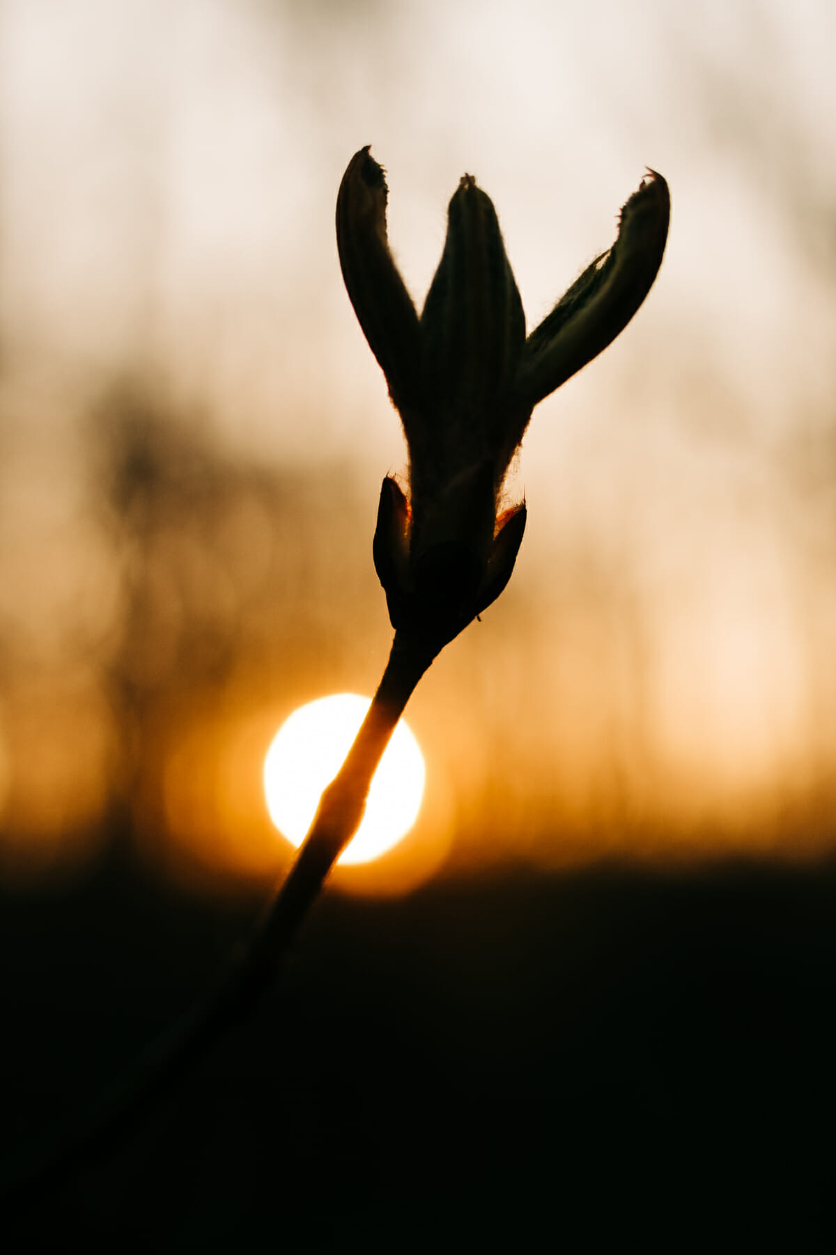Sunrise and spring at Almere Pampushout
